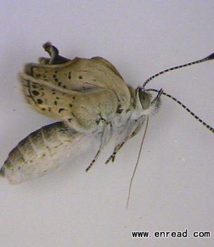 福岛核泄漏导致蝴蝶变异